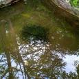 水面に写る木々とおたまじゃくし(2)
