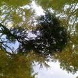 水面に写る木々とおたまじゃくし(3)